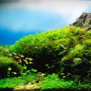 Eliminación de algas y hongos
